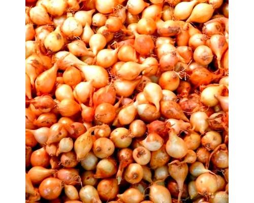 Озимный лук севок - Центурион (1 кг)